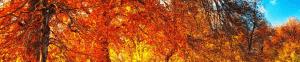 Осенние скидки Бюро переводов
